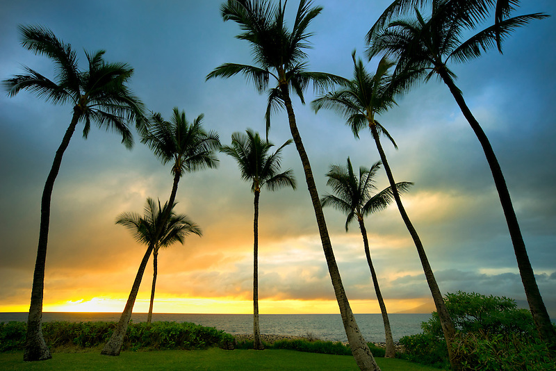 Sunset and palm trees. Maui, Hawaii
