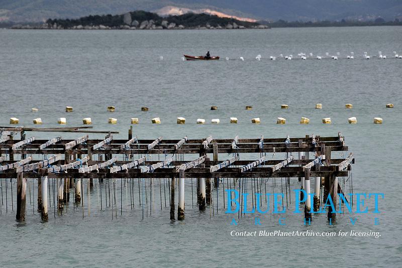 Oyster farming, South Bay, Florianopolis, Santa Catarina, Brazil