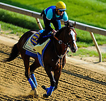 Bodemeister exercises on May 17, 2012 in preparation for the 137th running of the Preakness Stakes at Pimlico Race Course in Baltimore, Maryland