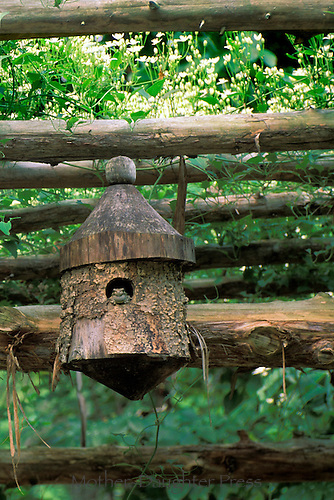 Toad sits in birdhouse on top of arbor in garden, quite pleased with his new home