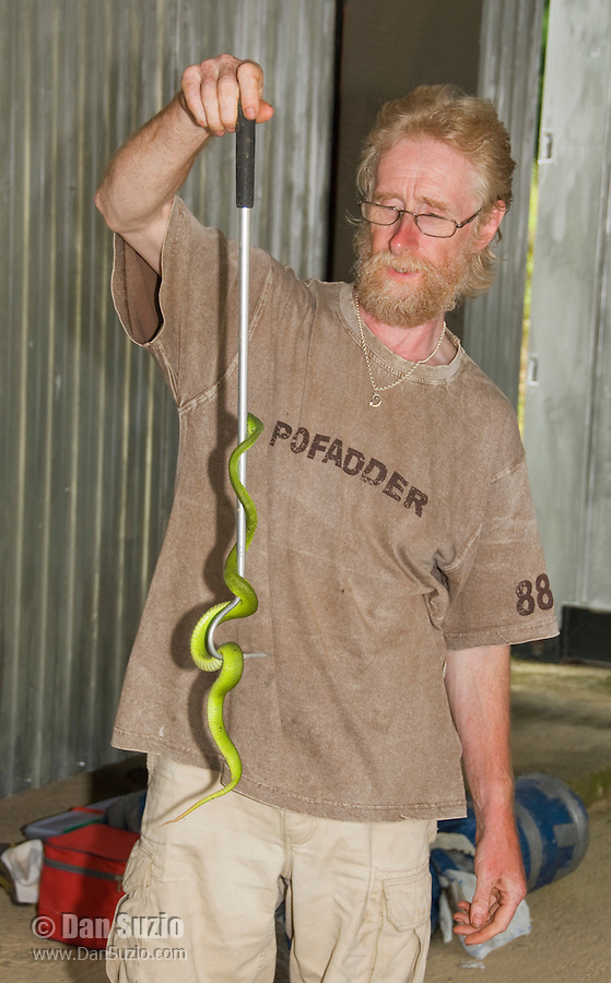 British herpetologist Mark O'Shea holds a Sunda Island pitviper, Cryptelytrops insularis, at Bakhita Mission, near Eraulo, Ermera District, Timor-Leste (East Timor)