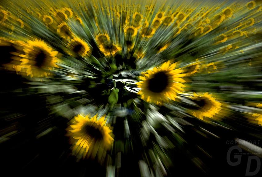 Abstract Flowers, yellow sun burst