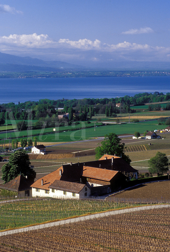 La Cote, Switzerland, Vaud, Rolle, Lake Geneva, Vaud, Europe, Scenic view of the countryside covered with vineyards and the village of Rolle in the spring along Lac Leman in the Canton of Vaud.