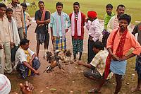 cock figth in Lohandiguda market in Chhattisgarh India