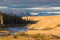 Hiker travels a sandy ridge along Ahnewetut Creek, the Great Kobuk Sand Dunes in the Kobuk Valley National Park, Arctic, Alaska.