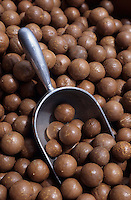 Océanie/Australie/Queensland/Env de Mareeba : Noix de macadam