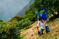 A Colombian farm worker carries a bag of avocados during a harvest at a plantation near Sonsón, Antioquia department, Colombia, 21 November 2019. Over the past decade, the Colombian avocado industry has experienced massive growth, both as a result of general economic development in Colombia, and the increased global demand for so-called superfood products. The geographical and climate conditions in Antioquia (high altitude, no seasonal extremes, high precipitation rate) allow two harvest windows of the Hass avocado variety across the year. Although the majority of the Colombian avocado exports are destined towards Europe now, Colombia aspires to become one of the major avocado suppliers to the U.S. market in the near future.