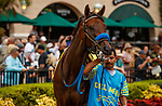 DEL MAR, CA  AUGUST 20:  #4 Edgeway, ridden by Joe Bravo, in the paddock before the Rancho Bernardo Handicap (Grade lll) on August 20, 2021 at Del Mar Thoroughbred Club in Del Mar, CA.  (Photo by Casey Phillips/Eclipse Sportswire/CSM)
