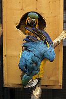 C.I.T.E.S. La Convenzione di Washington controlla il commercio internazionale degli animali e delle piante (vivi, morti o parti e prodotti derivati) minacciati di estinzione..C.I.T.E.S. The Washington Convention controls the international trade of animals and plants (live or dead parts and derivatives) are threatened with extinction..Controllo e sequestro di animali protetti. Inspection and seizure of protected animals.....