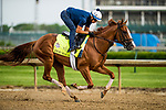 LOUISVILLE, KY - MAY 03: Good Magic, trained by Chad Brown, exercises in preparation for the Kentucky Derby at Churchill Downs on May 3, 2018 in Louisville, Kentucky. (Photo by Alex Evers/Eclipse Sportswire/Getty Images)