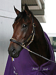 LEXINGTON, KY - APRIL 23: Nyquist walking the shedrow after working in preparation for the Kentucky Derby on May 7th at Churchill Downs in Louisville, KY.  April 23, 2016 in Lexington, Kentucky. (Photo by Candice Chavez/Eclipse Sportswire/Getty Images)