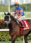Uncle Mo, ridden by jockey John Velasquez, wins the Timely Writer Stakes in his 2011 debut at Gulfstream Park in Hallandale beach, Florida on March 12, 2011.  Uncle Mo won the 2010 Breeders Cup Juvenile and is owned by Mike Repole and Repole Stables and trained by Todd Pletcher.