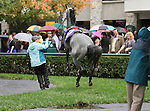 Poker Player goes airborn in the paddock before winning the 23rd running of the Bourbon Grade 3 $150,000 at Keeneland Race Course.   October 06, 2013.