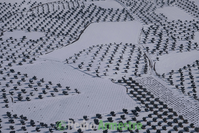 15/01/2021. Villaconejos, España<br /> <br /> Olivar cubierto de nieve y hielo.<br /> <br /> 'Filomena' también ha golpeado con dureza a las zonas más rurales, cubriendo de nieve y hielo campos de cultivo, invernaderos y granjas de animales. El temporal, al igual que la pandemia, ha mostrado la urgencia de relocalizar la producción agrícola, fomentar la agricultura urbana y periurbana y crear centros logísticos que den soporte a la pequeña producción alimentaria y a las comunidades rurales. La alimentación es un sector estratégico para la supervivencia, por lo que es fundamental un cambio de modelo y una apuesta decidida por la agroecología.<br /> <br /> ©Pedro Armestre/Greenpeace