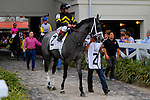 February 21, 2015:  White Clover with Jose Riqueime up in the Rachel Alexandra Stakes at the New Orleans Fairgrounds Risen Star Stakes Day. Steve Dalmado/ESW/CSM
