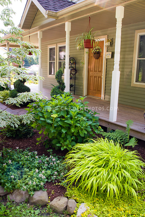 Small Entrance garden front of house yard curb appeal plantings, with groundcovers, perennial ornamental grass Hakonechloa Allgold, evergreens, variegated dogwood tree, porch, container bucket pot, hydrangea, hanging pots, groundcovers lamium and lysimachia creeping jenny