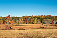 Golden field and autumn forest, Connecticut, CT, USA