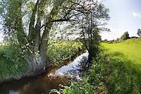 Bach, Bachlauf der Bille, Hamfelder Hof, Schleswig-Holstein. Mit alter Weide, Baum, Salix am Ufer. rivulet, brook