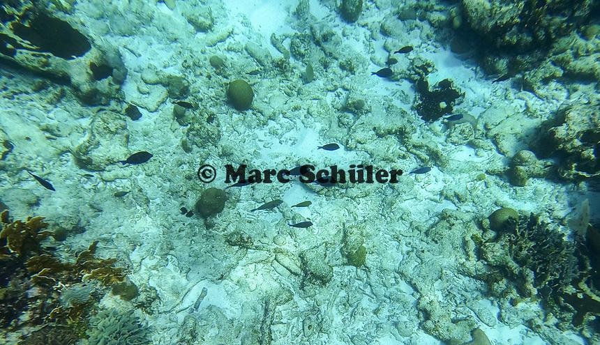Schnorcheln am Riff bei Caribe Point mit Jolly Adventures auf Roatan - 01.02.2020: Roatan mit der Costa Luminosa