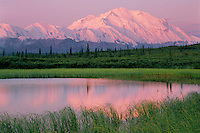 Mount McKinley from tundra pond<br />   near Wonder Lake<br /> Alaskan Range<br /> Denali National Park,  Alaska