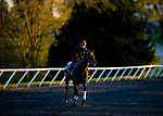 November 3, 2020: New Mandate trained by trainer Ralph M. Beckett, exercises in preparation for the Breeders' Cup Juvenile Turf at Keeneland Racetrack in Lexington, Kentucky on November 3, 2020. Alex Evers/Eclipse Sportswire/Breeders Cup