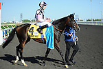 Wigmore Hall (no. 4), ridden by Jamie Spencer and trained by Michael Bell, wins the grade 1 Northern Dancer Turf Stakes for three year olds and upward on September 18, 2011 at Woodbine Racetrack in Rexdale, Ontario, Canada.  (Bob Mayberger/Eclipse Sportswire)