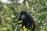 Costa Rican Monkeys