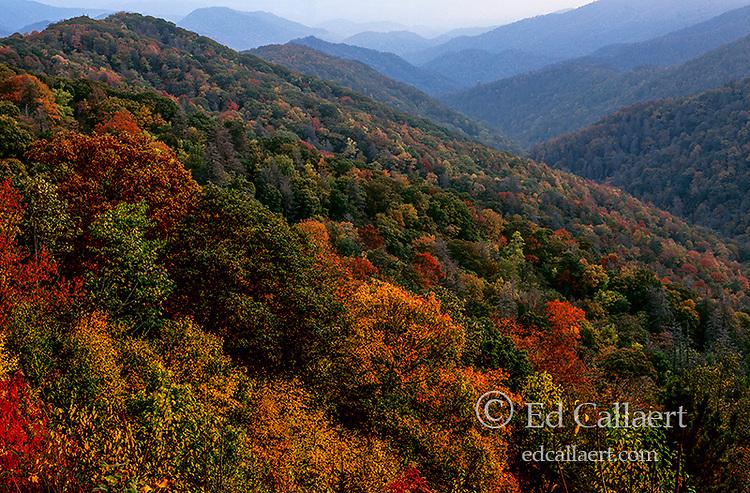 Autumn above Deep Creek, Great Smoky Mountains National Park, North Carolina