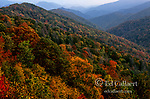 Autumn above Deep Creek, Great Smoky Mountains National Park, North Carolina