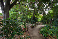Path with bench under oak trees and camellias in shaded woodland area of Gamble Garden, Palo Alto, California