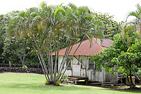 An old Hawaiian home along the Hana Highway, Maui.