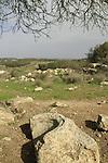 Israel, Shephelah, site of the ancient Synagogue in Hurvat Midras