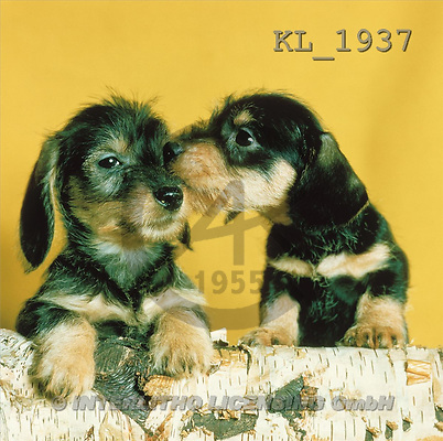 Interlitho, ANIMALS, dogs, photos, 2 dogs(KL1937,#A#) Hunde, perros