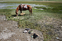 A horse grazes on the shores of Qinghai Lake. Qinghai Lake, China's largest inland body of water lies at over 3000m on the Qinghai-Tibetan Plateau. The lake has been shrinking in recent decades, as a result of increased water-usage for local agriculture. Qinghai Province. China. 2010