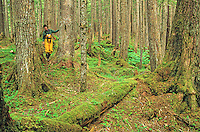 Woman walking among old growth hemlock trees growing in temperate rainforest near Point Adolphus on Chichagof Island in the Tongass National Forest west of Juneau, Alaska, AGPix_0688.