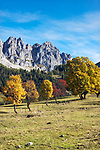 Oesterreich, Salzburger Land, Pongau, bei Filzmoos: Herbstlandschaft vor dem Dachsteingebirge, Gosaukamm | Austria, Salzburger Land, Pongau, near Filzmoos: autumn scenery and Dachstein Mountain Range