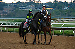 """DEL MAR, CA  AUGUST 21: #11 Say the Word, ridden by Joe Bravo, in the post parade of the Del Mar Handicap (Grade ll) Breeders Cup """"Win and You're In"""" Turf Division on August 21, 2021 at Del Mar Thoroughbred Club in Del Mar, CA  (Photo by Casey Phillips/Eclipse Sportswire/CSM)"""