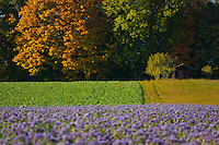 Field with different kind of flowers