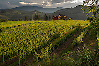 Landscape scenic, art photograph of an estate winery situated amongst the vineyard rows and the Columbia and Cascade mountain ranges that surround the valley that is near the town of Oliver, in British Columbia, Canada.<br /> The lighting on this photograph was very dramatic because the last few minutes of the warm golden rays of sun was shining across the rows of vineyards to create textured highlights across the tops of the vines.