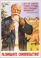 """Советский плакат """"Развивайте свиноводство!"""". Художник А.Мосин, 1955 год;<br /> Soviet poster """"Develop pig breeding!"""" Artist A. Mosin, 1955;"""