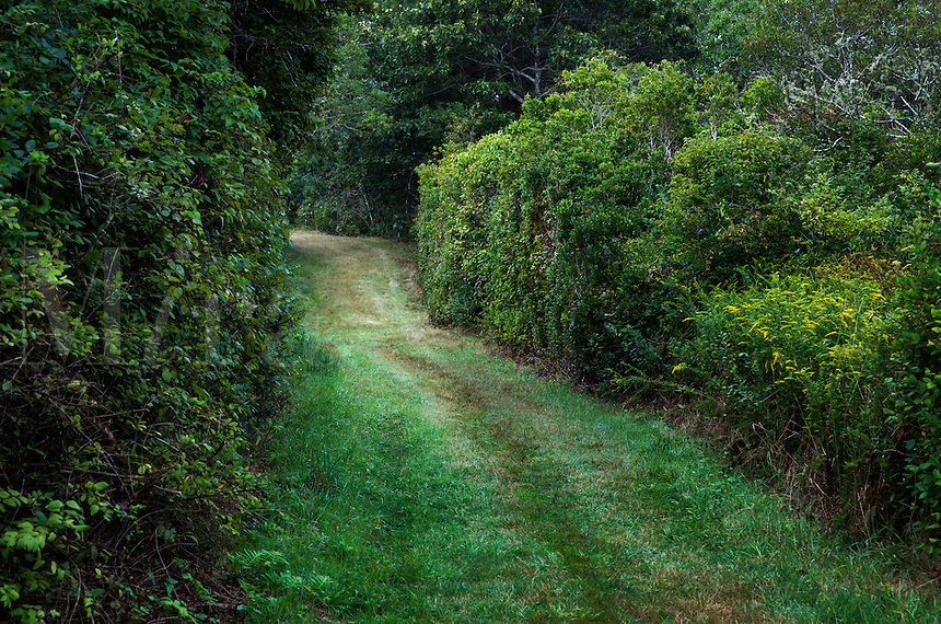 Unpaved grass country road.