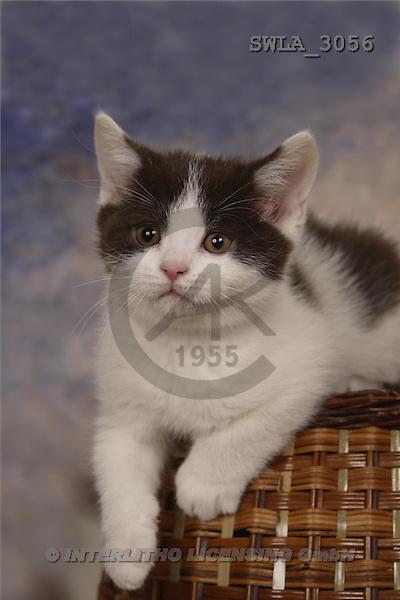 Carl, ANIMALS, photos, kitten, basket(SWLA3056,#A#) Katzen, gatos