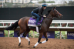 DEL MAR, CA - NOVEMBER 02: Ami's Mesa, owned by Ivan Dalos and trained by Josie Carroll, exercises in preparation for Breeders' Cup Filly & Mare Sprint during morning workouts at Del Mar Thoroughbred Club on November 2, 2017 in Del Mar, California. (Photo by Michael McInally/Eclipse Sportswire/Breeders Cup)