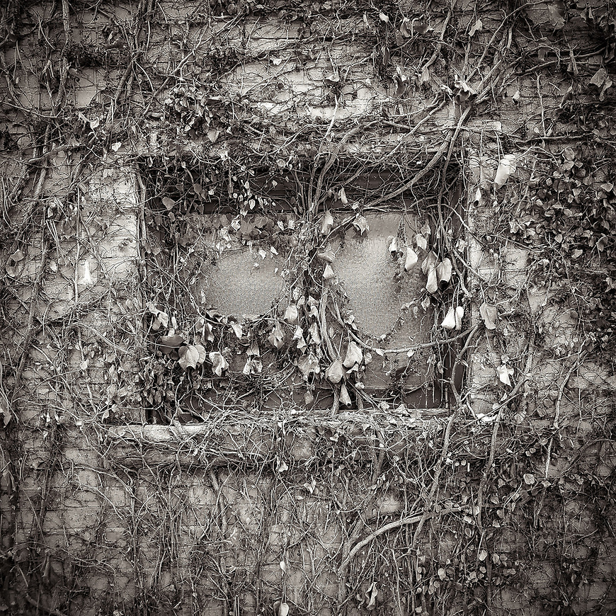 WINDOW COVERINGS -- A vine-covered window in Spring Green, Wisconsin, USA.  #michaelknapstein #midwest #midwestmemoir #blackandwhite #B&W #monochrome #motherfstop #wisconsin  #bwphotography #myfeatureshoot  #fineartphotography #americanmidwest #squaremag #lensculture #mifa #moscowfotoawards #moscowinternationalfotoawards #rps #royalphotographicsociety #CriticalMass #CriticalMassTop200 #photolucida #contemporaryphotography  #portfolioshowcase11 #thegalaawards #thepolluxawards #flakphoto #ipe160 #grainedephotographe  #galleryofwisconsinart