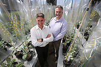 July, 20, 2018. San Diego, CA. USA.| Cibus CEO Peter Beetham, left, and Chief Science Officer Greg Gocal in the in the company's canola green house. |Photo: Jamie Scott Lytle. Copyright.