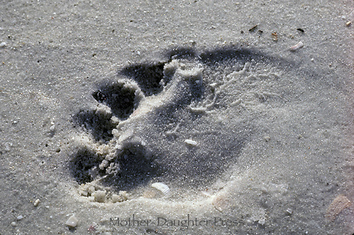 A foot print in the sand