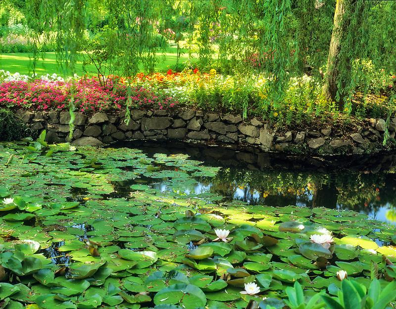 Lily pond. Butchart Gardens. Victoria, British Columbia, Canada.