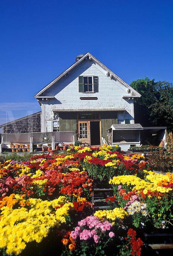 Tobey's farm market, Dennis, Cape Cod