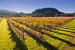 Fall vineyard in St. Helena
