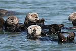 Monterey Bay Area, CA. Marine mammals. 2010 Edit.